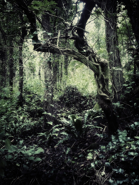 personal iphoneonly photography