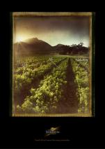 stories Nederburg Wine photography